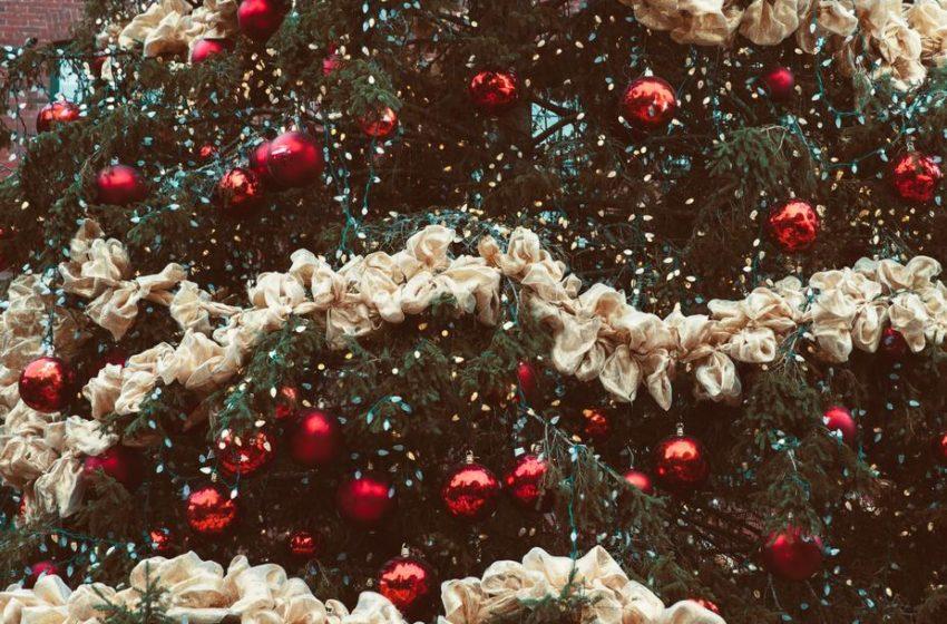 Picea abies, l'albero di Natale