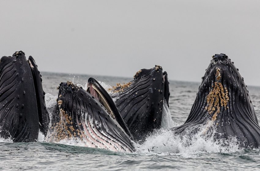 Nei plutonici abissi dell'ossessione: Achab contro Moby Dick